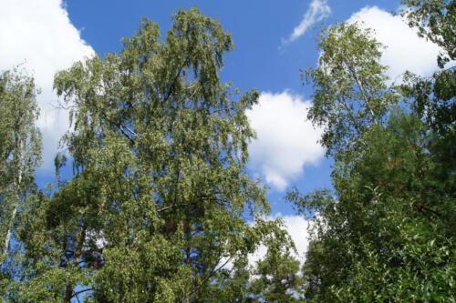 Bäume Himmel